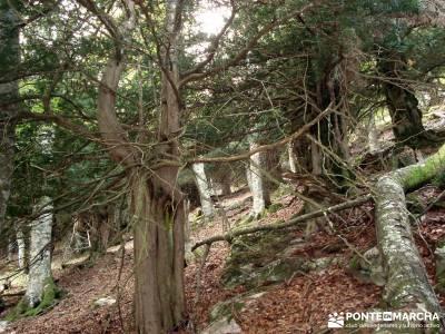 Montaña palentina;senderismo por libre senderismo fácil power walking madrid